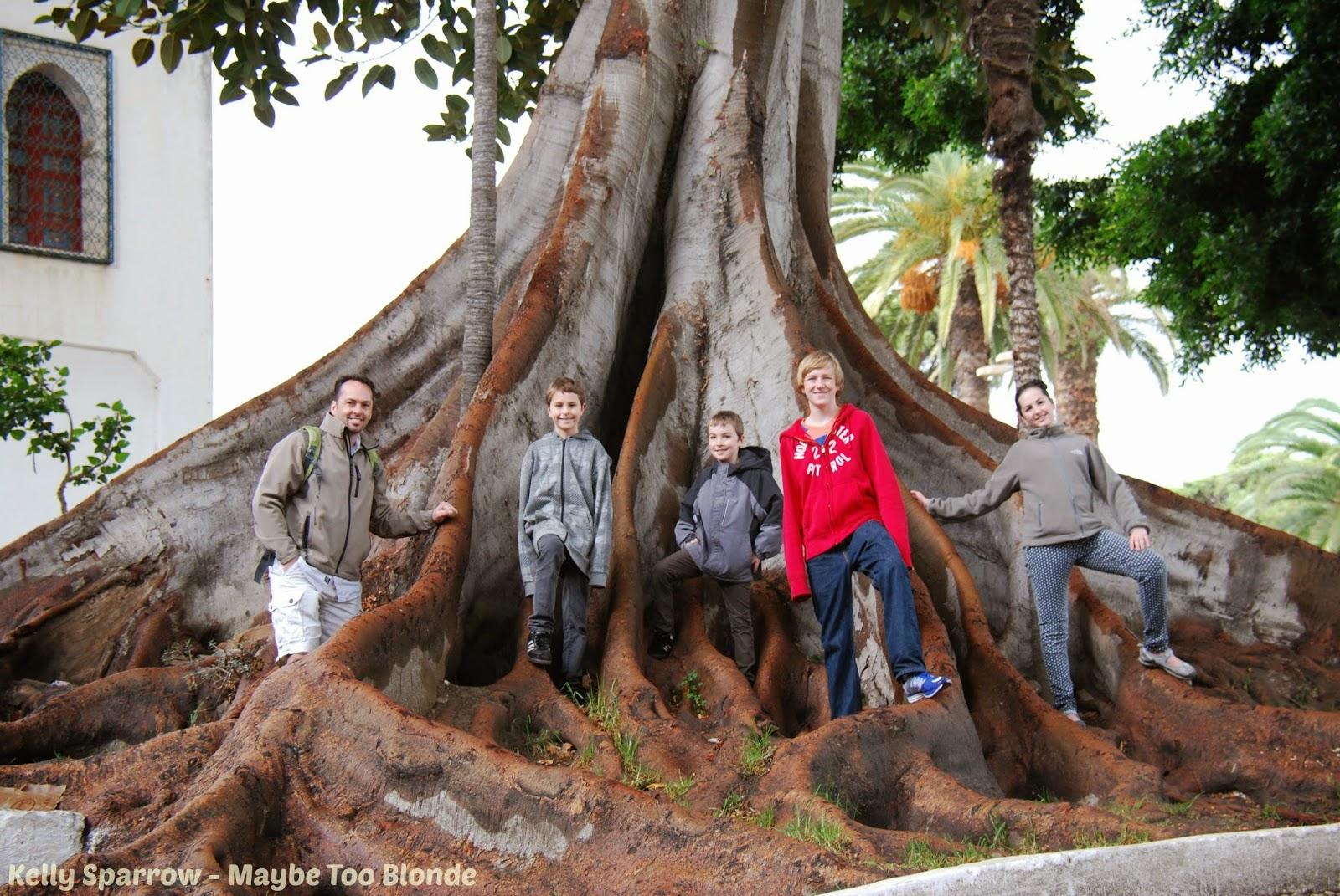 Tangier Tree