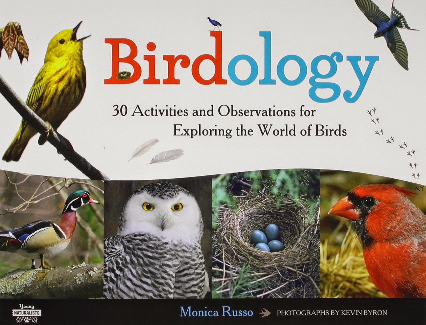 books about birds what can we do with paper and glue