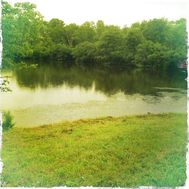 pond summer