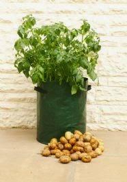 σάκοι φύτευσης για καλλιέργεια πατάτας ακόμα και στο μπαλκόνι