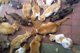 Jenazah Wanita Diikuti Banyak Kucing