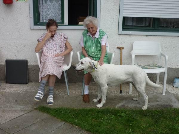 A kutyasímogatás gyógyít
