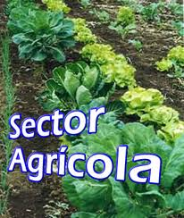Régimen Intermedio sector agricola