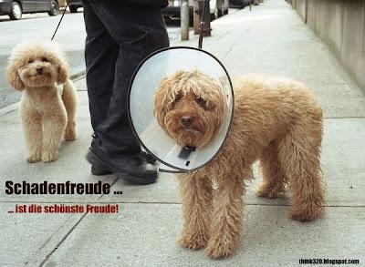 Hund mit Schadenfreude lacht seinen Freund aus mit dem Trichter um den Hals.
