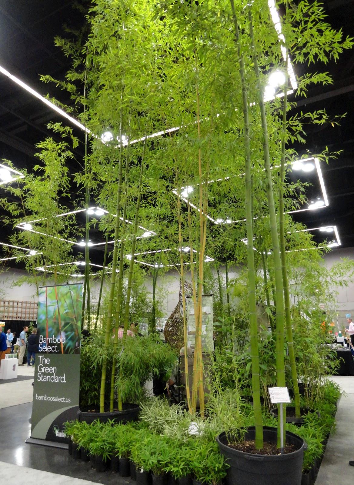 bamboo gardens booth