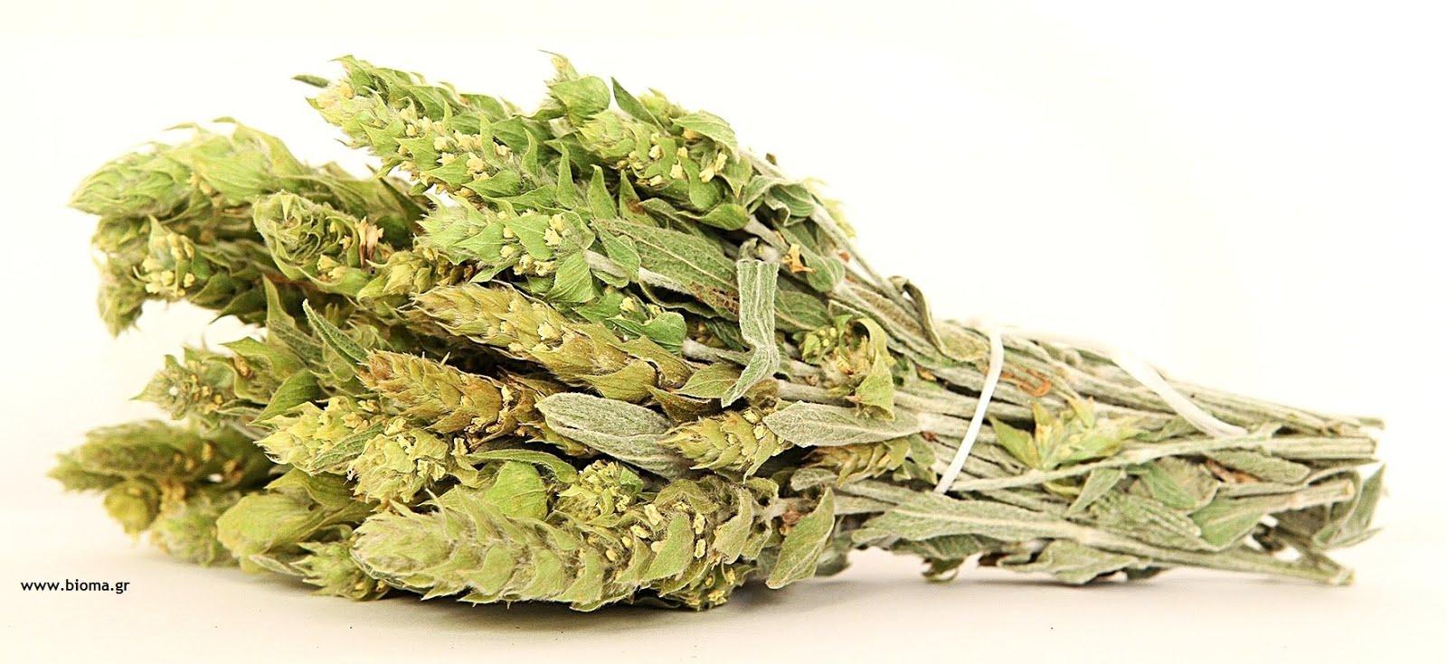 Greeks Herbs Varietes