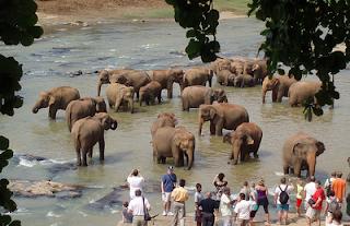Pinnawela Elephant Orphanage Sri Lanka