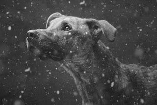 Elke Vogelsang, fotografía, photography, animales, pets