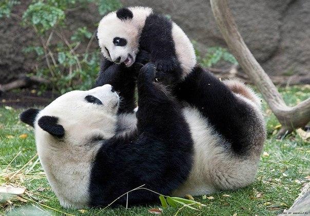 красивые-фотографии-животных-со-свом потомством