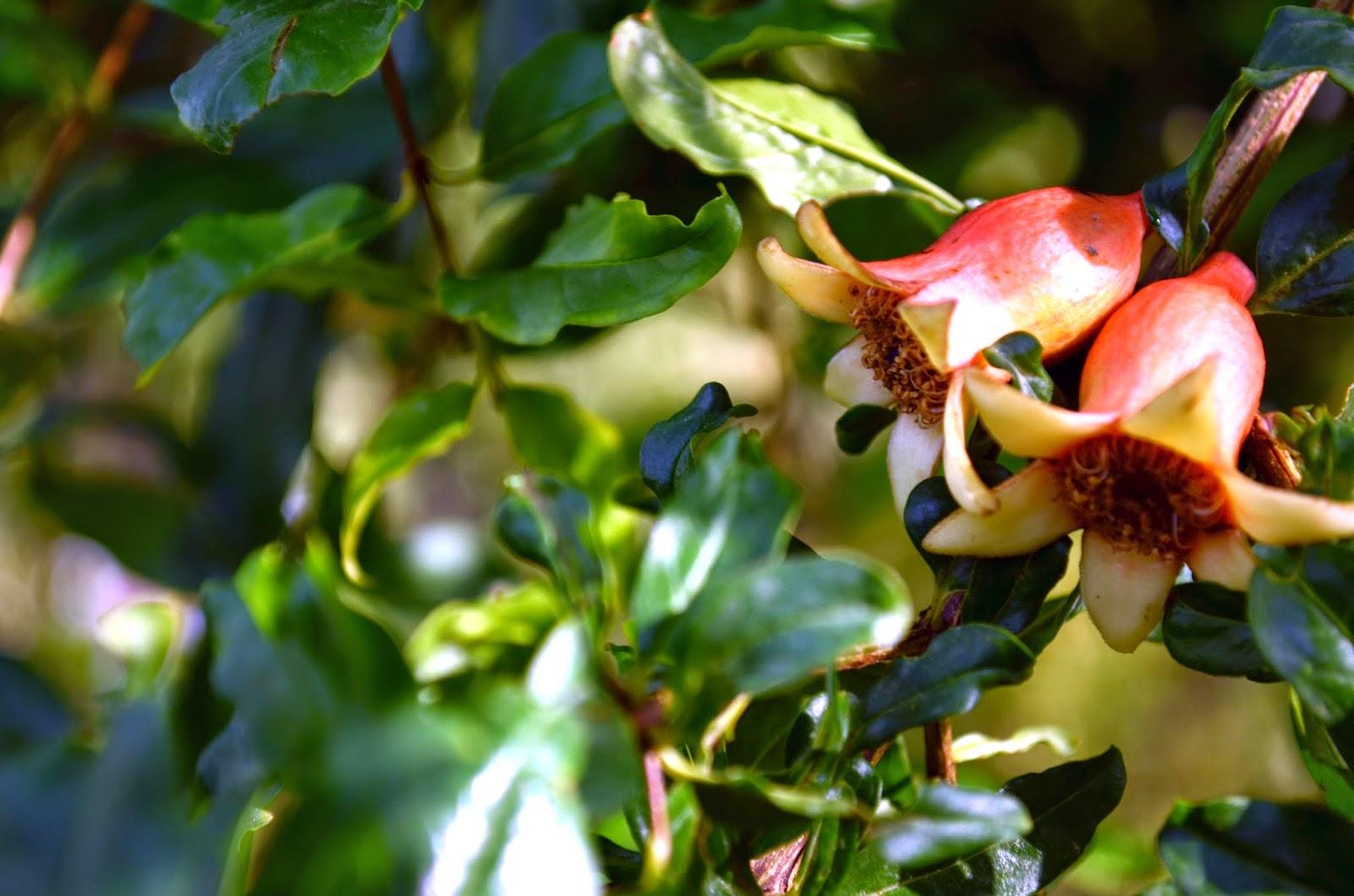 kite runner pomegranate tree