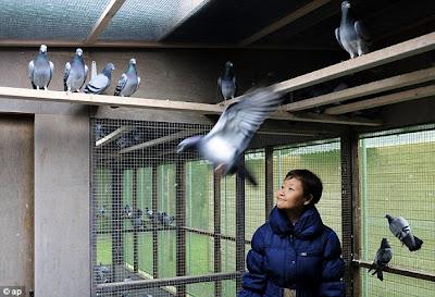 Foto jutawan China yang membeli Bolt di situs pigeon paradise
