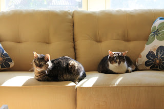 Our cats, Mielle and Pirate, enjoying the new furniture.