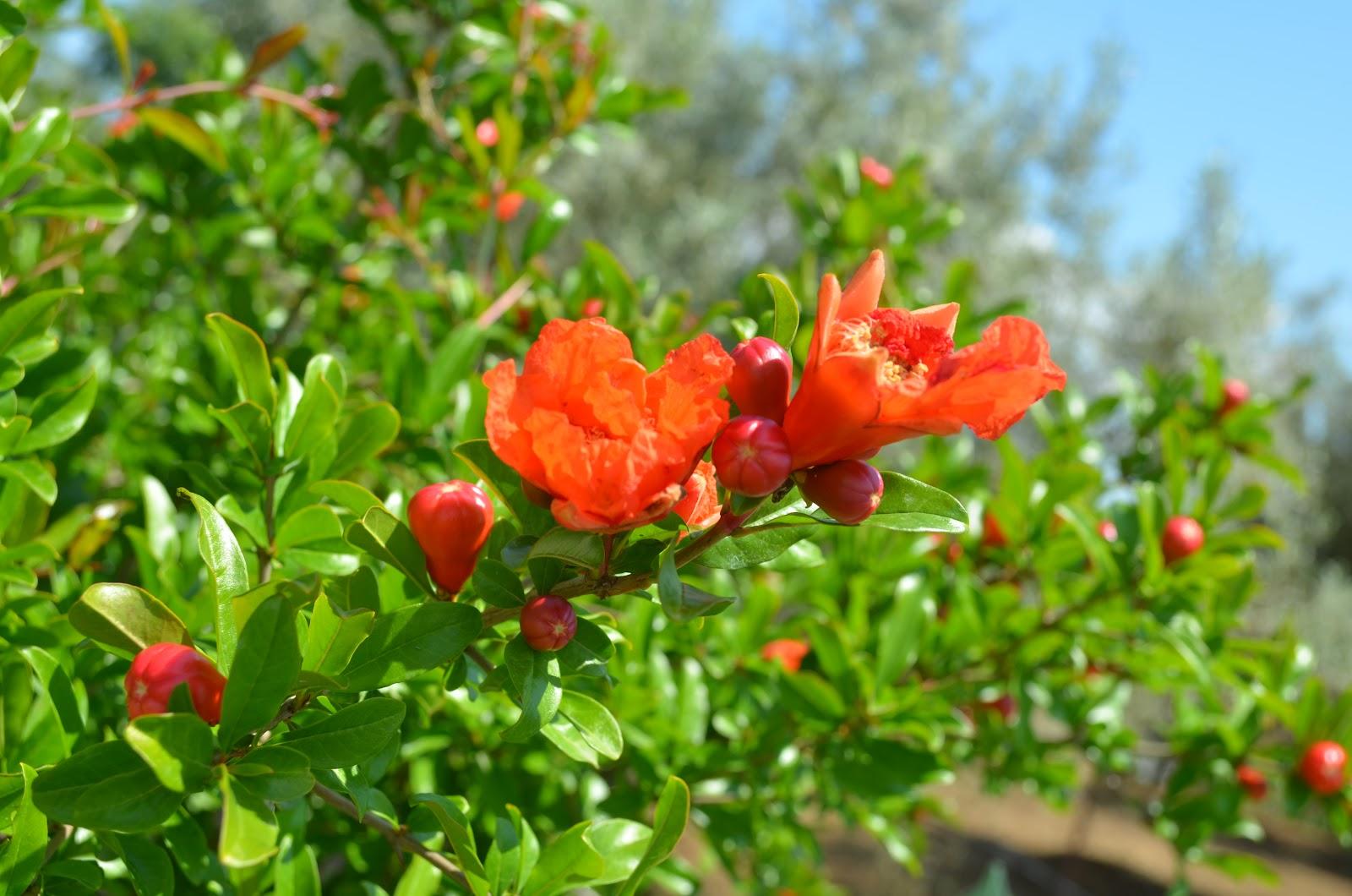 Flori  pentru case si gradini  DSC_0061-001