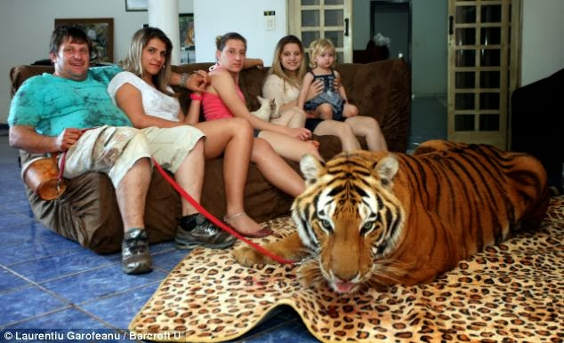 Familia,hogar,tigres