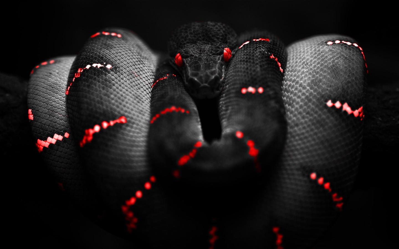 http://4.bp.blogspot.com/-NA6Z-w1ep-k/UD8XIHmPtxI/AAAAAAAAAKw/mzxaZLcPnsk/s1600/Photoshop_Snake_HD_Wallpaper_Red_1440x900.jpg