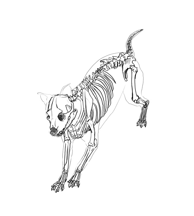 Anatamation: where Anatomy meets Animation: Dog anatomy