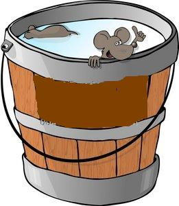 how to catch mice in a bucket of water