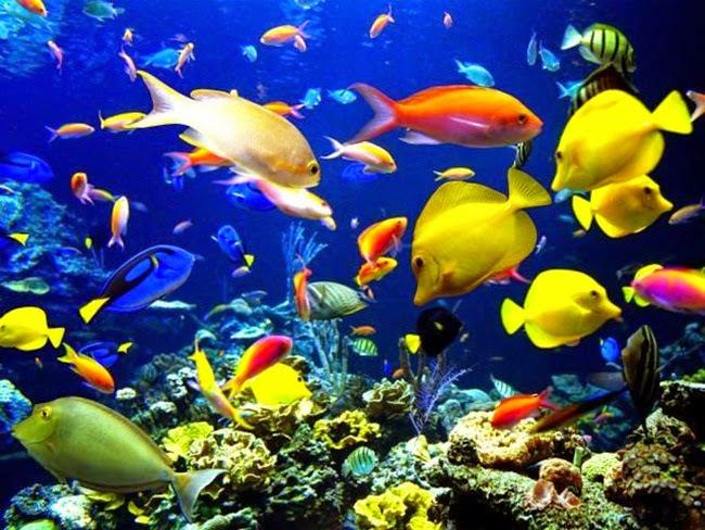 أجمل الأسماك الاستوائية الملونة   - صفحة 2 Colorful-tropical-fishes-03