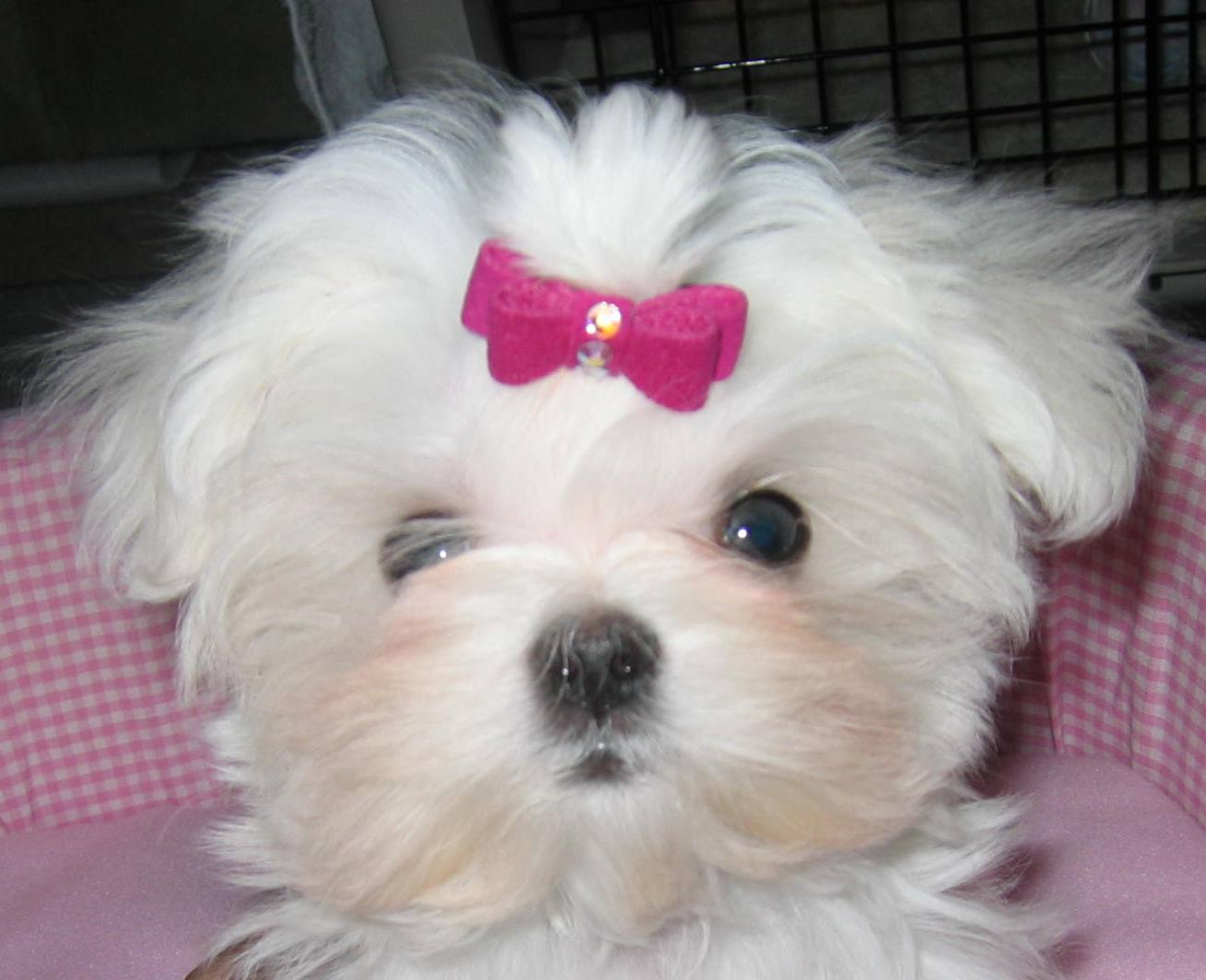 Dog Pets For Sale Philippines