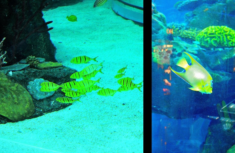 aquariums and fishtanks at morocco mall