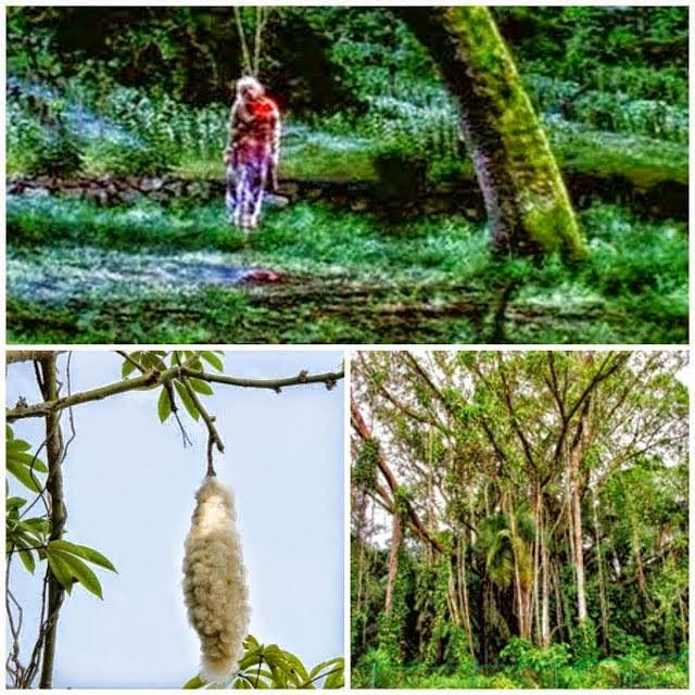 AWAS Ketahui 11 Jenis Pokok Yang Menjadi Tempat Tinggal Hantu Yang Mesti Kita Tahu Dan Berhati Hati
