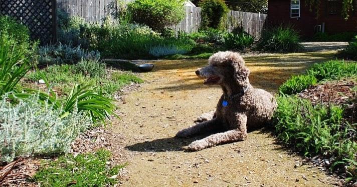 Mascotas perros y gatos animales dom sticos un perro for Ahuyentar perros del jardin