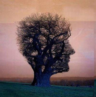 اشجار غريبة ومرعبة في العالم Trees, strange and terrifying in the world  Human_Shape_Strange_and_funny_Tree+%25289%2529