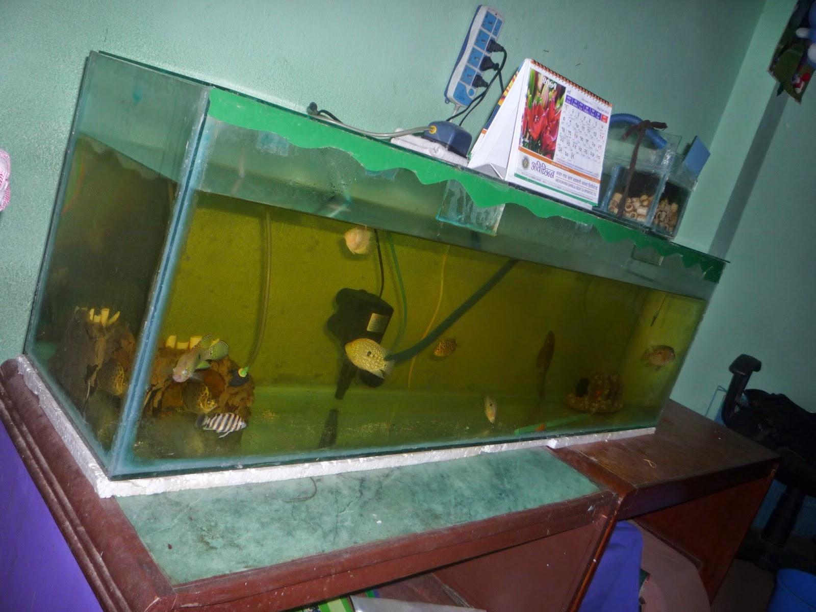 Nerd quari t nepal aquarium stand most important - Aquarium table ...