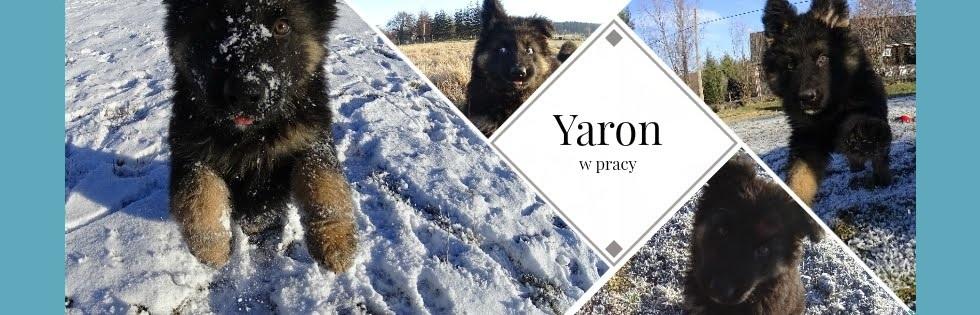 Yaron w pracy