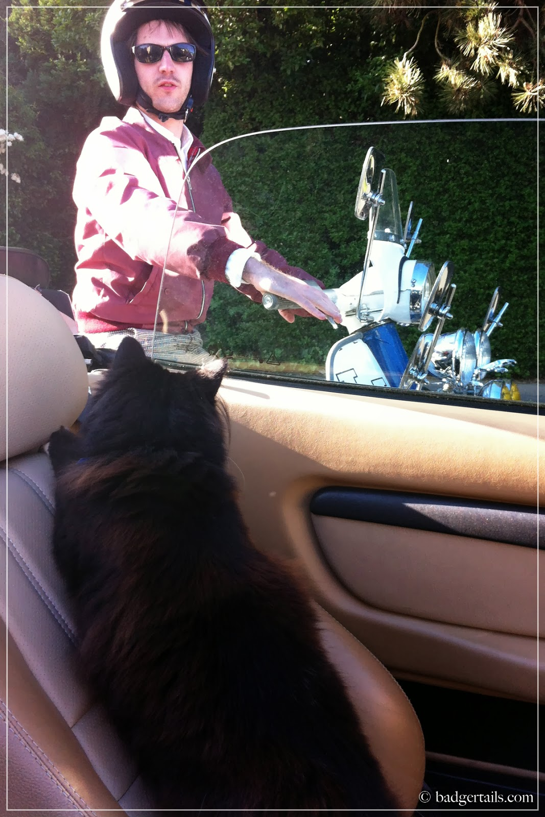 black cat in convertible car in summer greets her dad on scooter