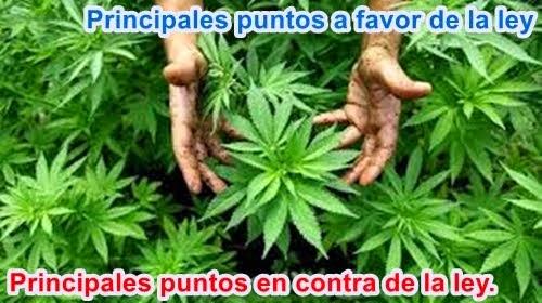 COLOMBIA: Especial/ Regulación de Marihuana medicinal: ¿cura o enfermedad?