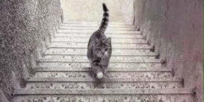 Kucing Ini Naik atau Turun Tangga