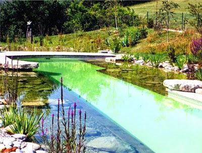 Le blog le chlore des piscines rentre dans notre corps for Chlore dans la piscine