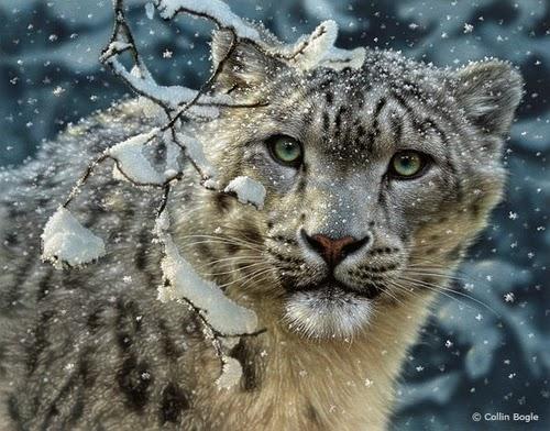 06-Snow-Leopard-Collin-Bogle-Animal-Wildlife-in-Art-www-designstack-co