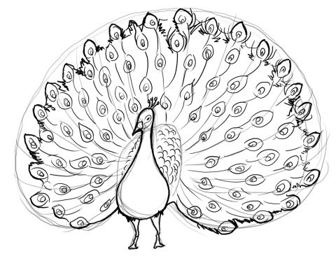 Peacock body outline - photo#8