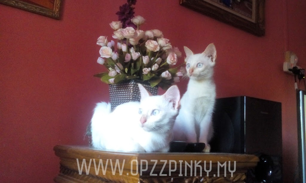 Si Kembar Miau Miau
