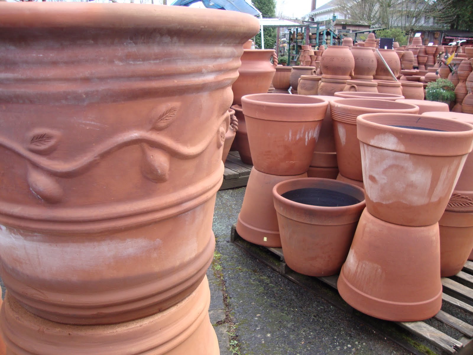 Danger garden little baja for Little baja pottery