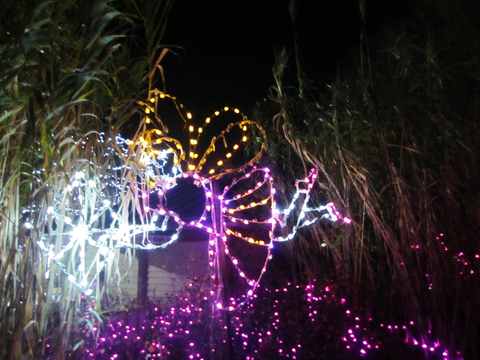 Fairy princess Christmas lights at the zoo.