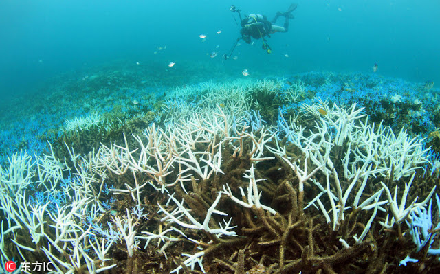 Japan's largest coral reef is 90% bleached becoming the latest victim as coral reef's are dying at
