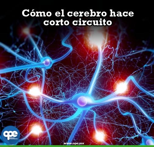 Circuito Neuronal : Datos curiosos cómo el cerebro hace corto circuito