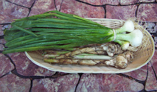 Basket of Large Scallions and Semi-Dry Garlic