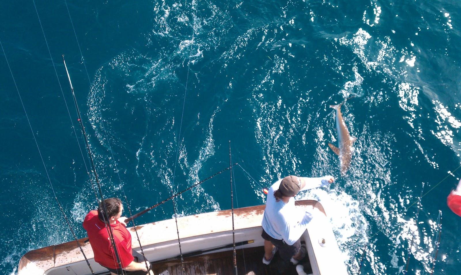 Miami fishing blog preferable place of fishing in miami for Fishing in miami