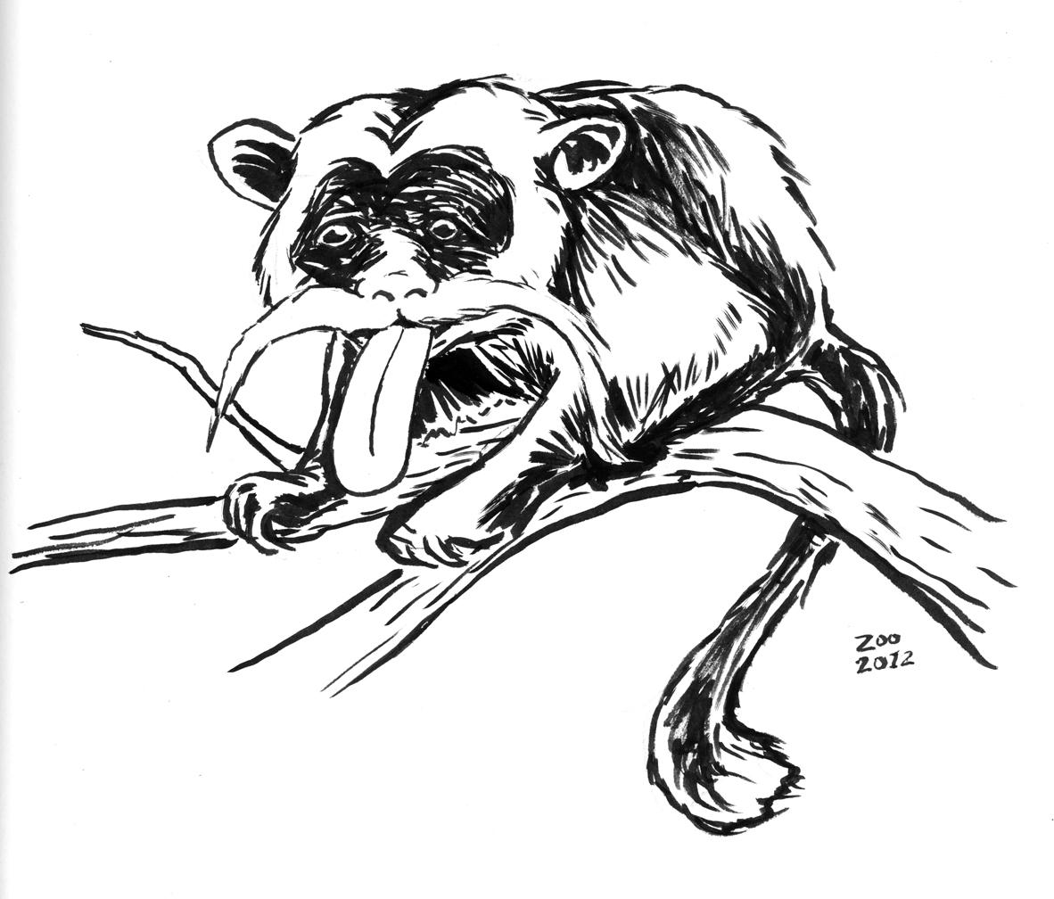 artmonkey zoo drawings