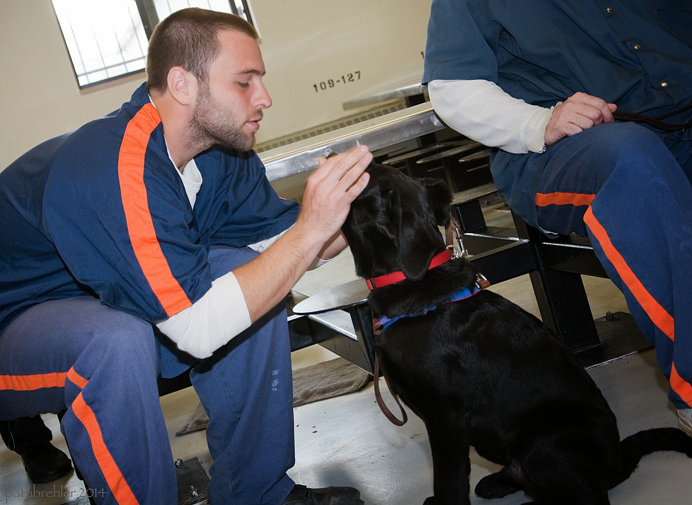 A man dressed in the blue prison uniform is sitting on the lunch table stool and bending to the right toward a black lab puppy. The man has his hands on the puppy's snout and is lifting the puppy's jowls to check his teeth. The puppy is sitting down facing the man. There is another man sitting on a stool in the backgrond on the right side, but only his right side is visible.