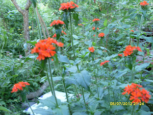 Ekofasistina toimikaamme luonnon ehdoilla ilman mokutuksen rasitteita