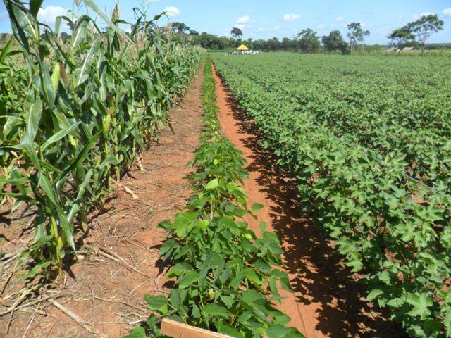 Deag comunicaciones la rotaci n de cultivos y el uso de for Que es la asociacion de cultivos