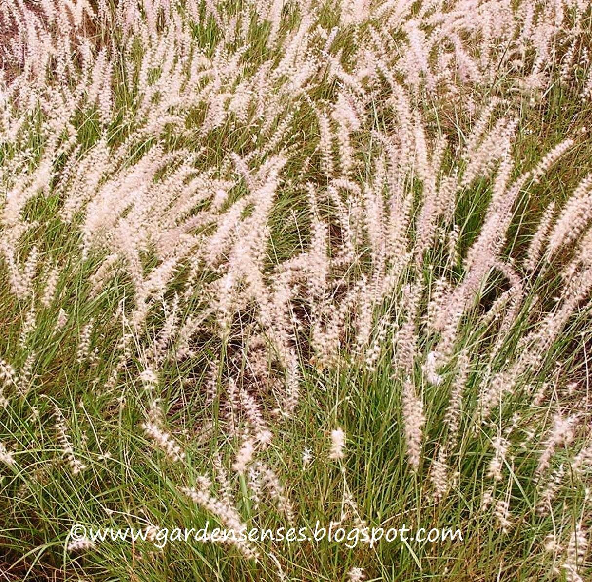 Garden Sense: Book Review - Perennial Companions