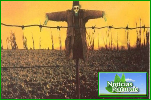 [Imagem: Lei-Monsanto-Sementes-para-Quem-Sementes-para-que.jpg]