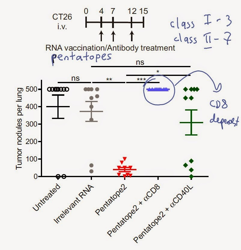 Reciprocal T subset-specific tumor protection by RNA vaccine ...
