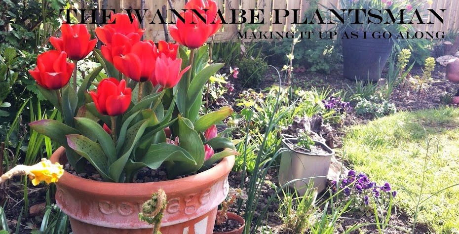 The Wannabe Plantsman